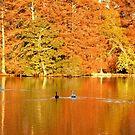 SWAN LAKE, SUMTER SC by cshphotos