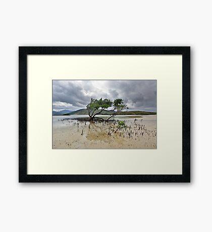 Mangrove Tree Framed Print