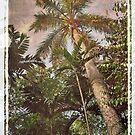 Palm tree by IngeHG