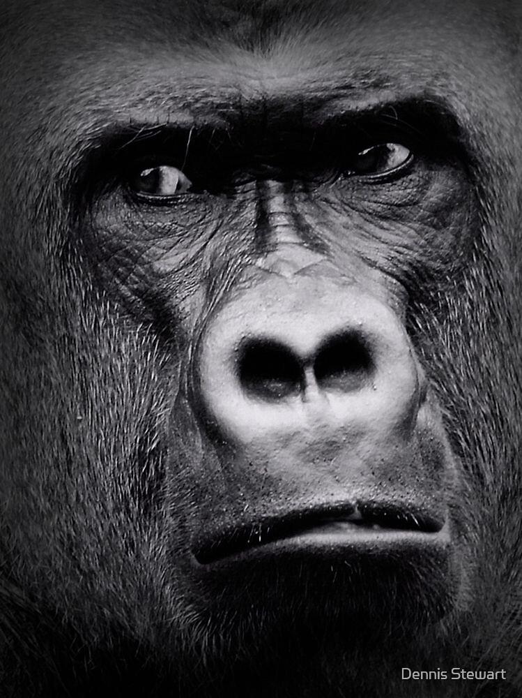 Gorilla Closeup by Dennis Stewart