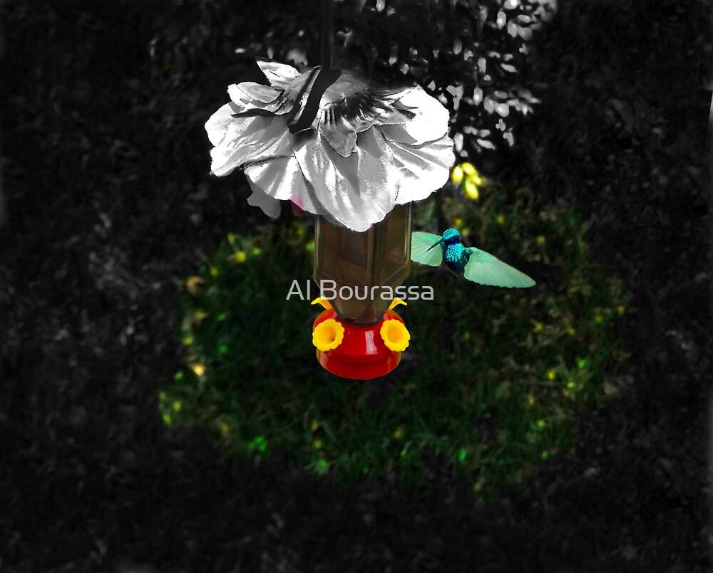 Hummingbird In The Spotlight by Al Bourassa