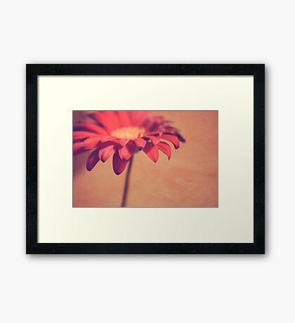 Red Daisy Framed Print