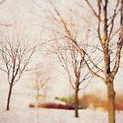 Woodland Dreams by sandra arduini