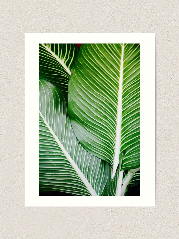 Palm Leaf Wall Art Tropical Leaf Prints Printable Leaf Green Leaf Print Tropical Leaves Art Palm Leaf Print Palm Prints Art Print By Alex Artprints Redbubble If you use them i would really like to see your work! palm leaf wall art tropical leaf prints printable leaf green leaf print tropical leaves art palm leaf print palm prints art print by alex artprints redbubble