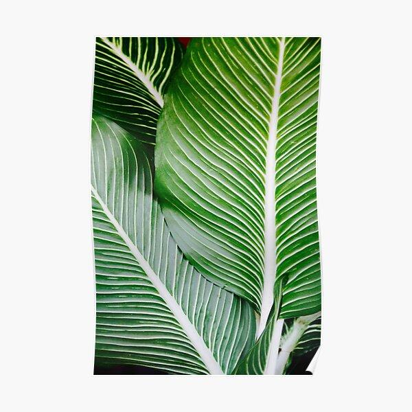 Palm Leaf Wall Art, Tropical Leaf Prints, Printable Leaf, Green Leaf Print, Tropical Leaves Art, Palm Leaf Print, Palm Prints Poster