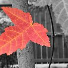 The Leaf that Dared to Stand Out from the Crowd! by kenspics