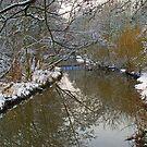 Queen's Park Winter Wonderland by Sarah Williams