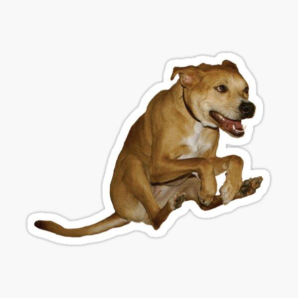 Raditude Dog Sticker