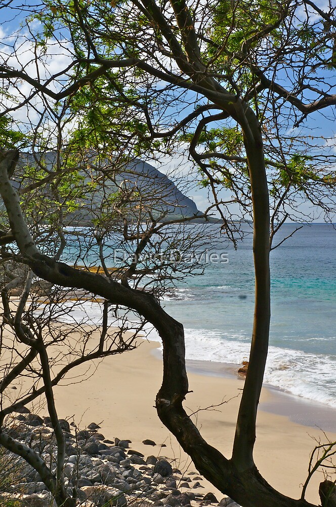 Kepuhi Point from Kaena State Park. And Another Tree! by David Davies