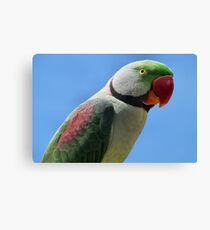 Alexandrine Parrot Gifts Merchandise Redbubble