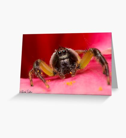 (Mopsus mormon male) Jumping Spider Greeting Card