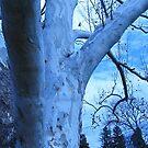 blue birch by Laurkat