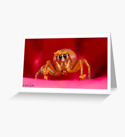 (Cosmophasis micans?) Jumping Spider  Greeting Card