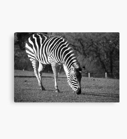 Black and White Zebra Canvas Print
