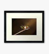 hummer in the spotlight Framed Print