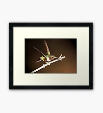 HUMMER IN THE LIME LIGHT Framed Print