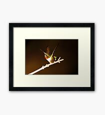 HUMMINGBIRD IN SPOTLIGHT Framed Print