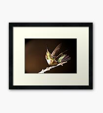 "HUMMINGBIRD I""M IN THE MONEY Framed Print"