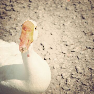 Quack!  by letterchan
