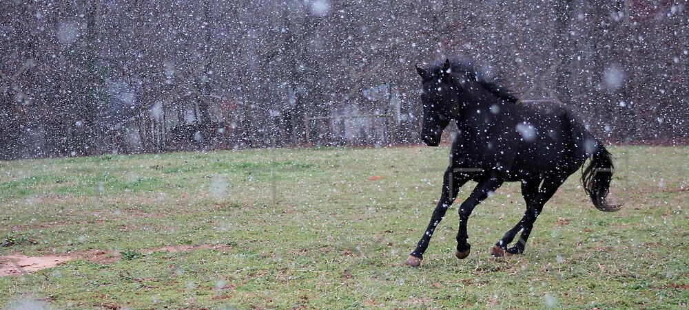 Snow Play by BerryvineImage