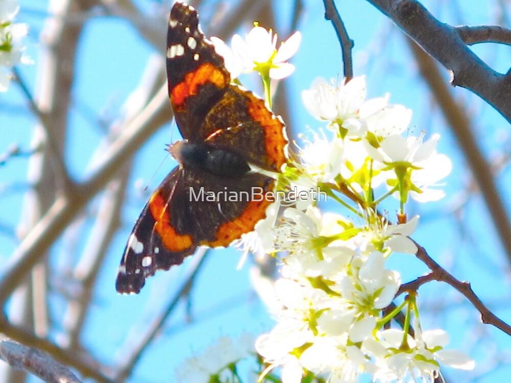Open wings by MarianBendeth