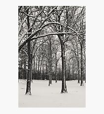 Walk In The Park Photographic Print