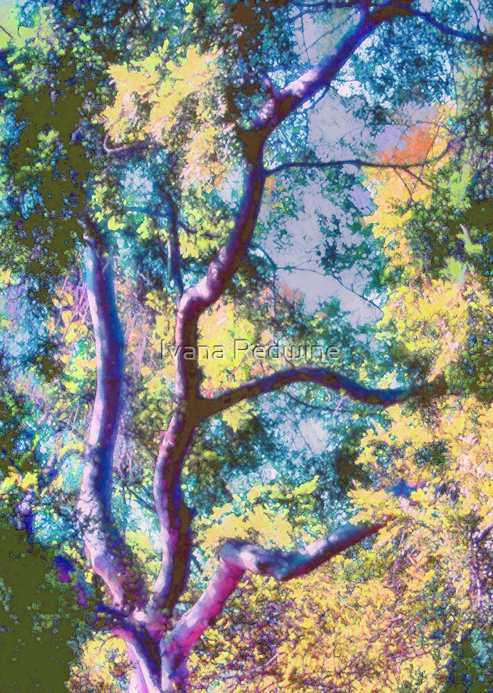 Fauvist Tree With Vibrant Foliage in Light and Shadow—Version Two by Ivana Redwine