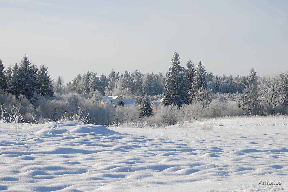 Winter 2013 /2 by Antanas