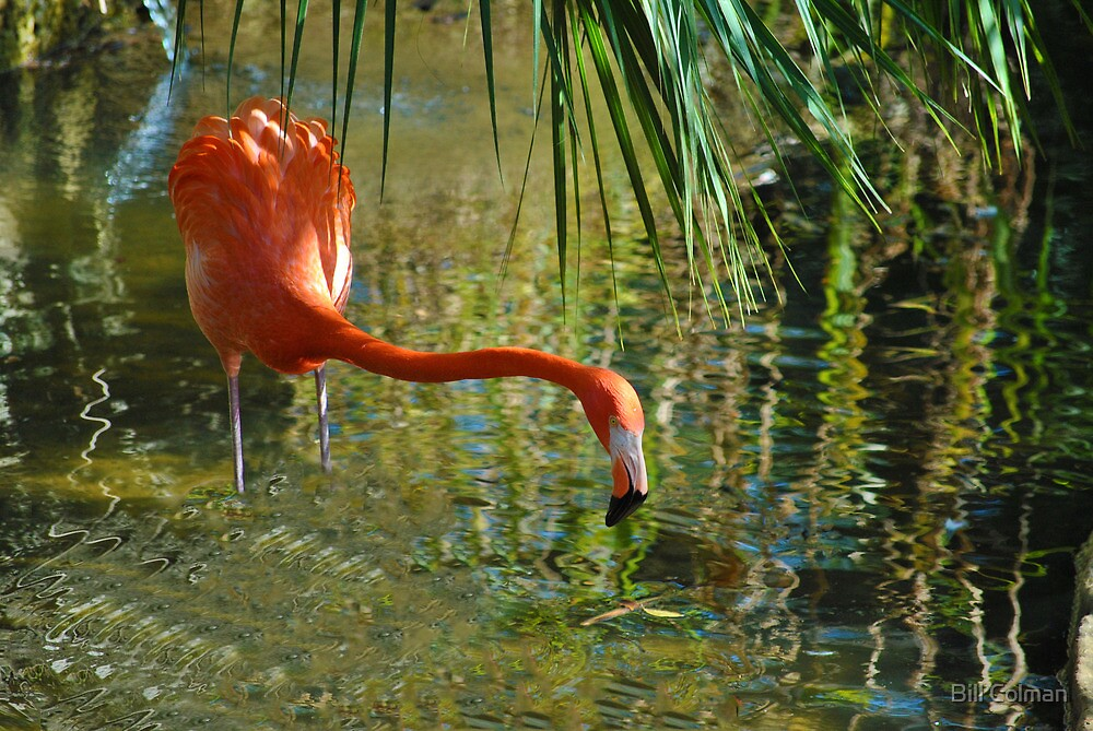 Flamingo In The Shade by Bill Colman