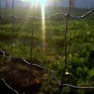 Framed Sun in Green by gaurav0410