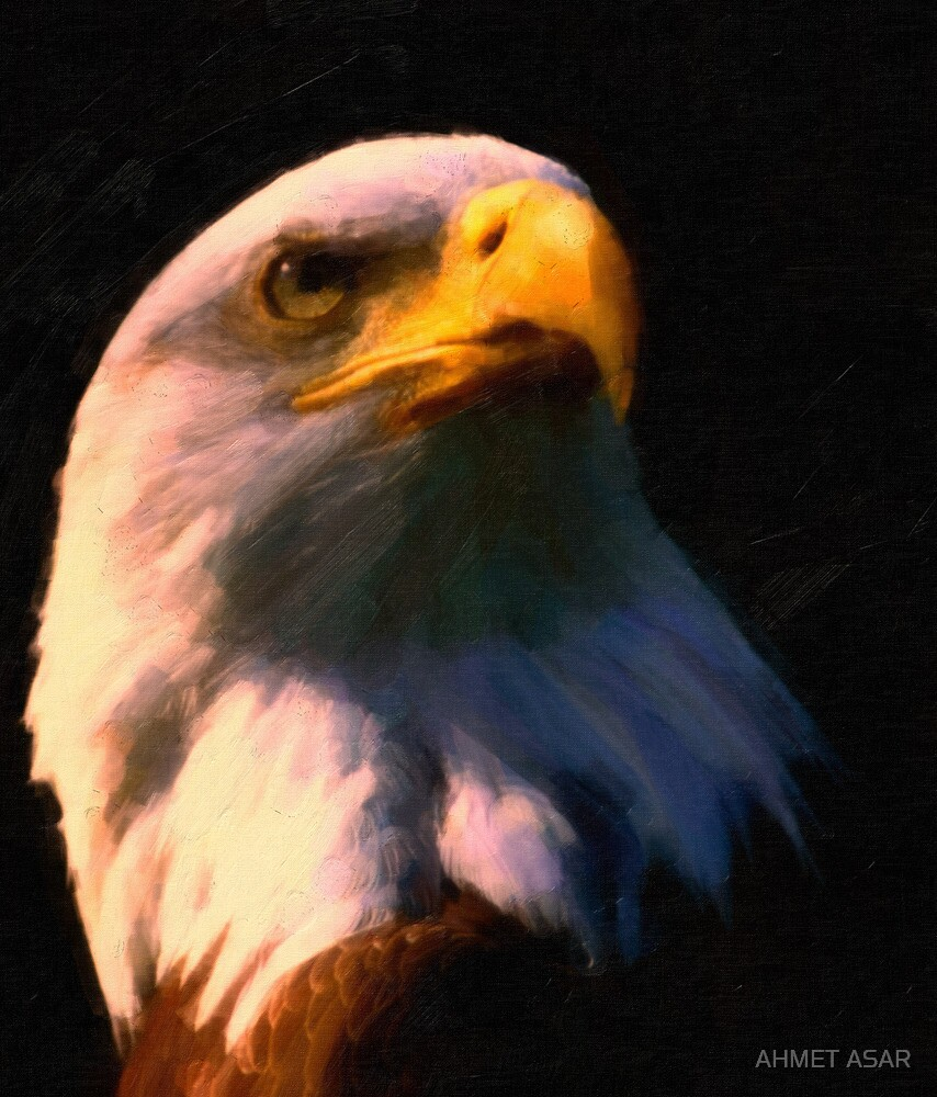 American Bald Eagle by MotionAge Media