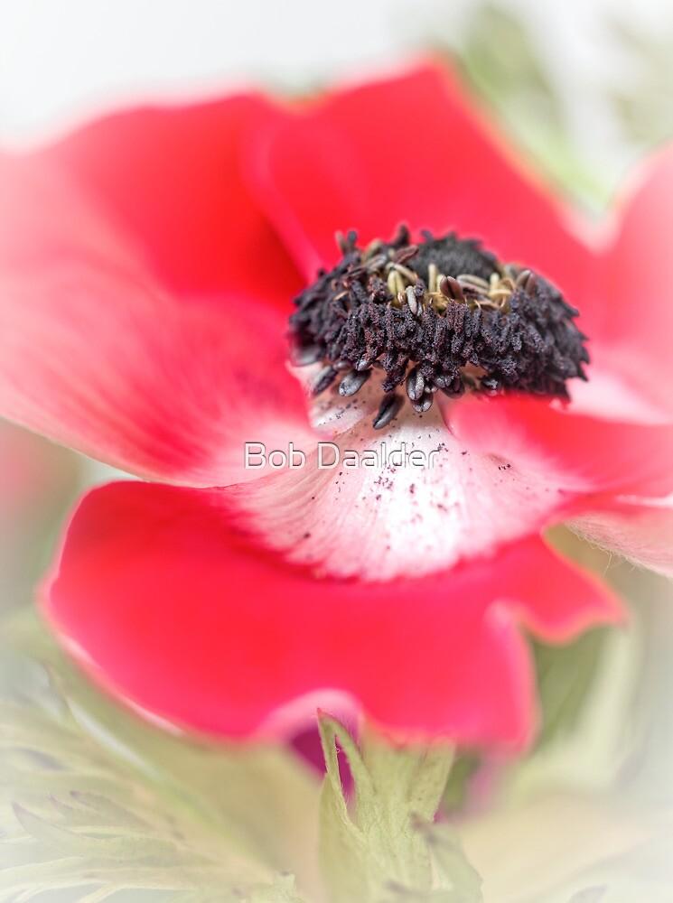 Red Anemone....(III) by Bob Daalder