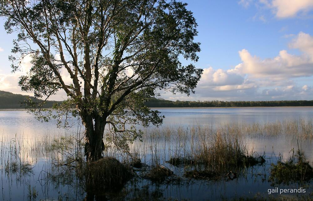Afternoon at Cudgen Lake . by gail woodbury