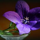 Bell Flower in the Limelight by karina5