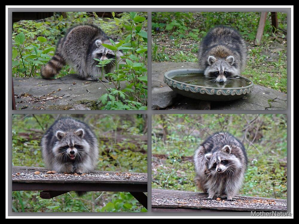 Raccoon Antics by MotherNature