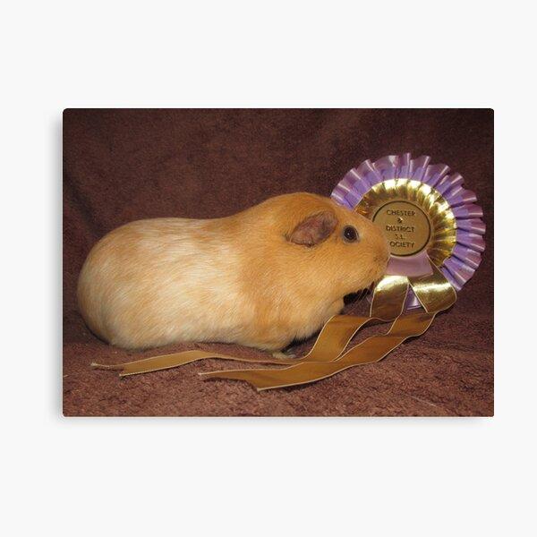Honey - Best Pet Guinea Pig Canvas Print