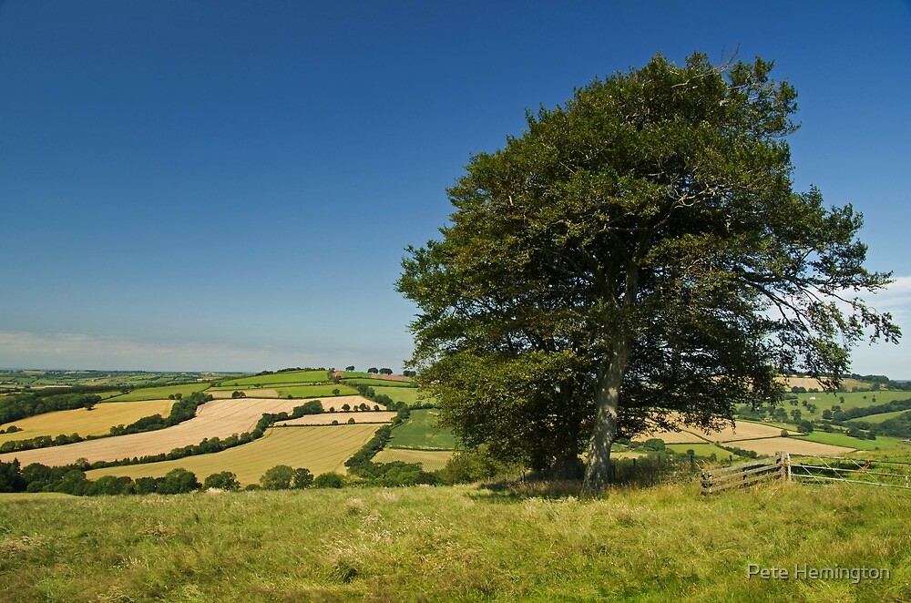 Summer on Raddon Top by peteton