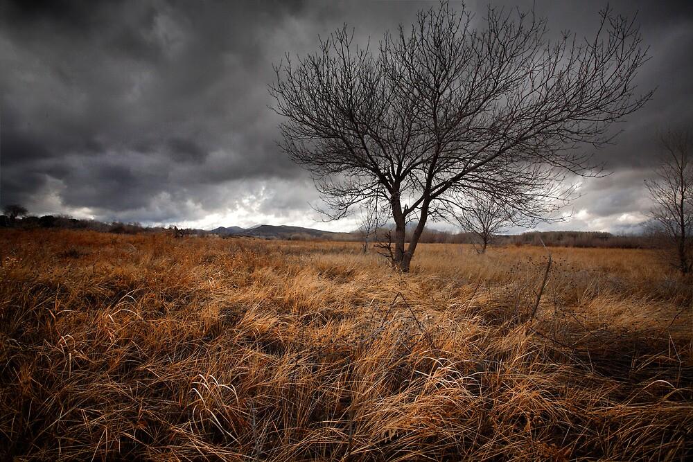 Winters Brew by Bob Larson
