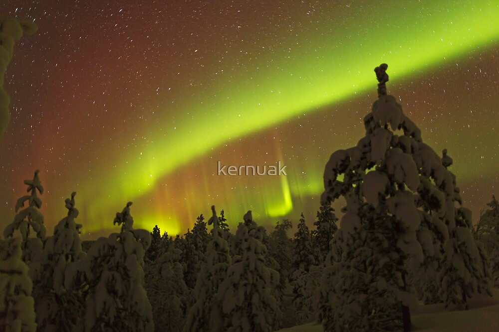 Auroral Arc over Trees by kernuak