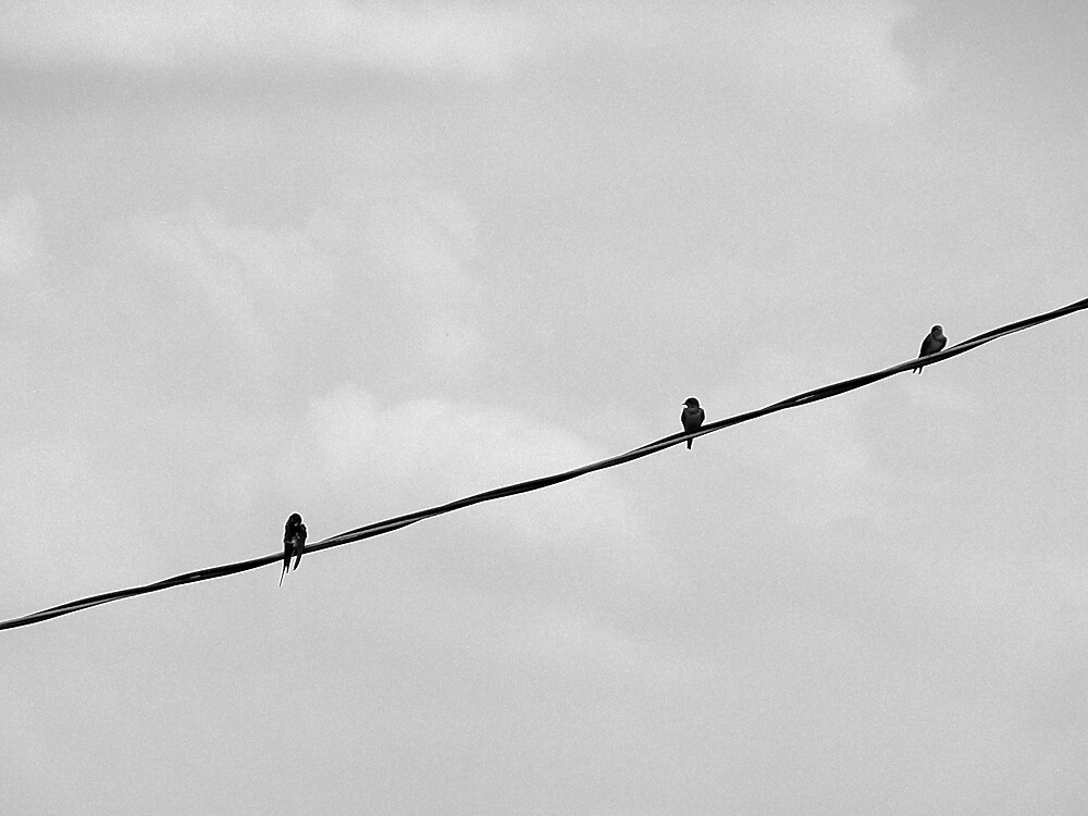 bird on a wire by psc3802