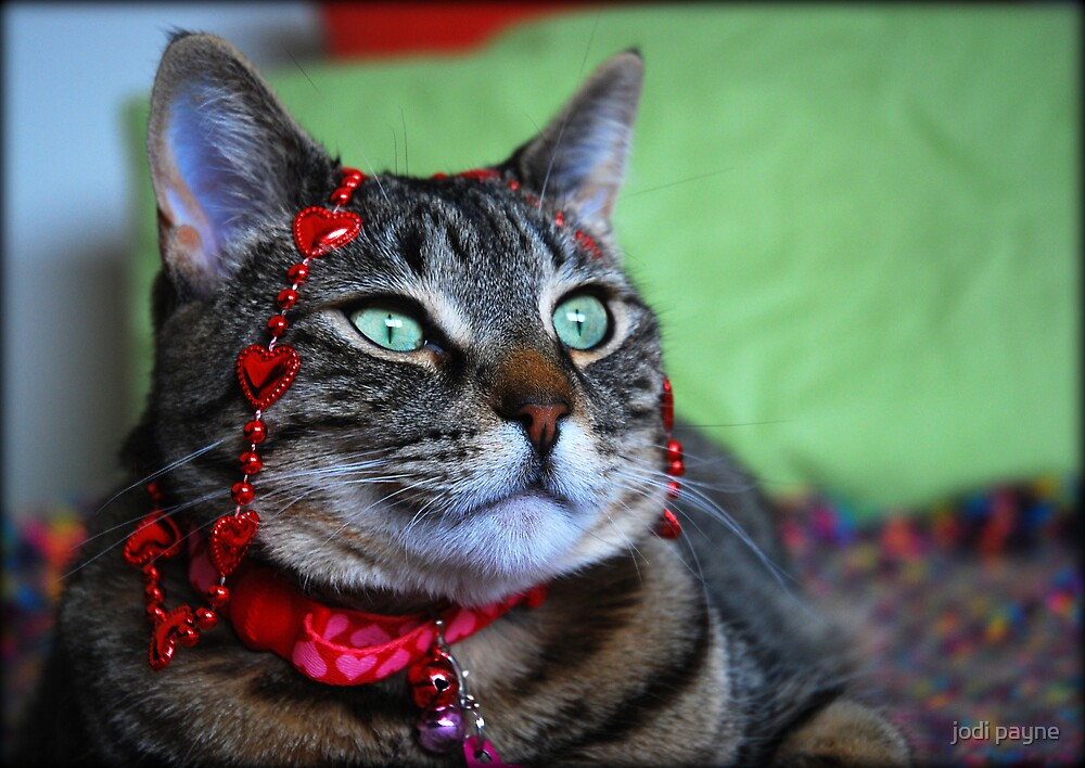 My Heart Kitty by jodi payne