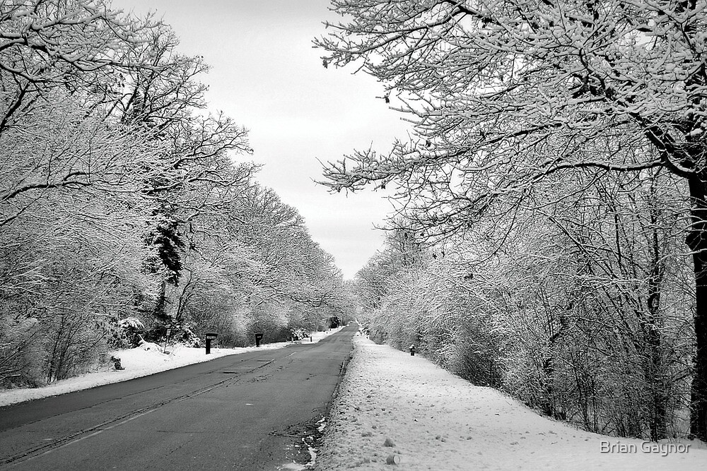The Winter Road by Brian Gaynor