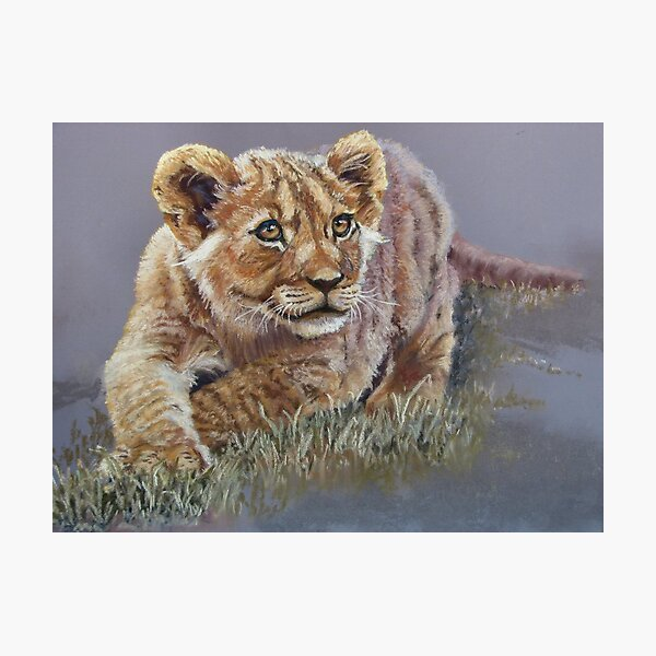 Young Lion Photographic Print