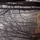 Misty Trees  by Great North Views