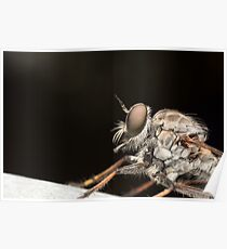 Robberfly Profile Poster