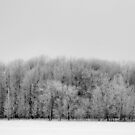 frosty day by Lynne Prestebak