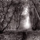 Mysterious Pathway by Great North Views