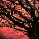 Firery Tree by Great North Views