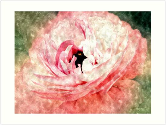 Pink Ranunculus Water Color by Sharon Woerner