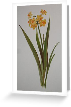 Wild Jonquil by taiche